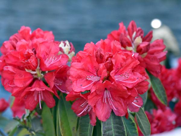 f:id:flowerTDR:20170416181904j:plain