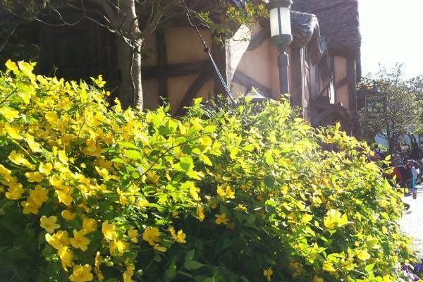 f:id:flowerTDR:20170419155933j:image