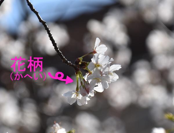 f:id:flowerTDR:20170424233938j:plain