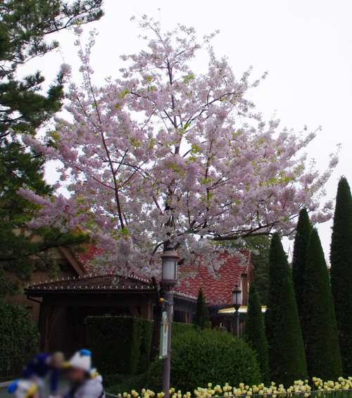 f:id:flowerTDR:20170424235306j:plain