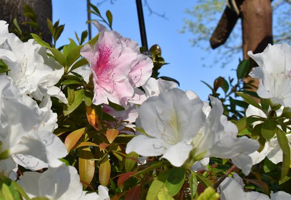 f:id:flowerTDR:20170428200126j:plain