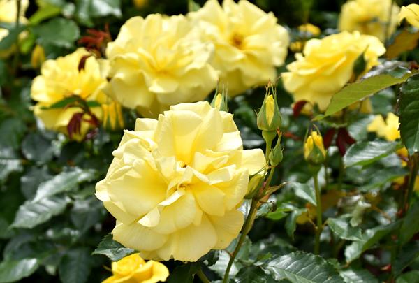 f:id:flowerTDR:20170507181533j:plain