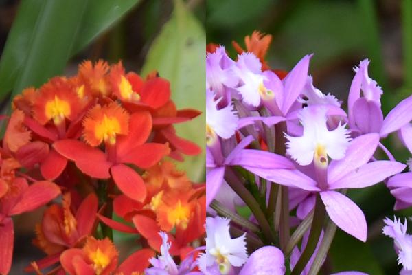 f:id:flowerTDR:20170513081753j:plain