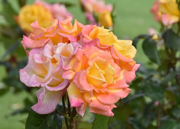 f:id:flowerTDR:20170514213959j:plain