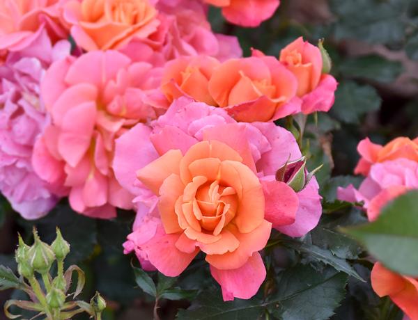 f:id:flowerTDR:20170519215044j:plain