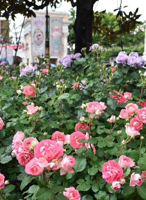 f:id:flowerTDR:20170520154117j:plain