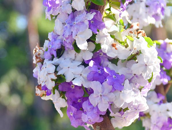 f:id:flowerTDR:20170524164327j:plain