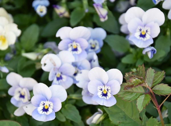 f:id:flowerTDR:20170527131045j:plain