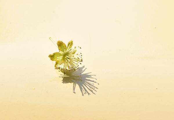 f:id:flowerTDR:20170529210111j:plain