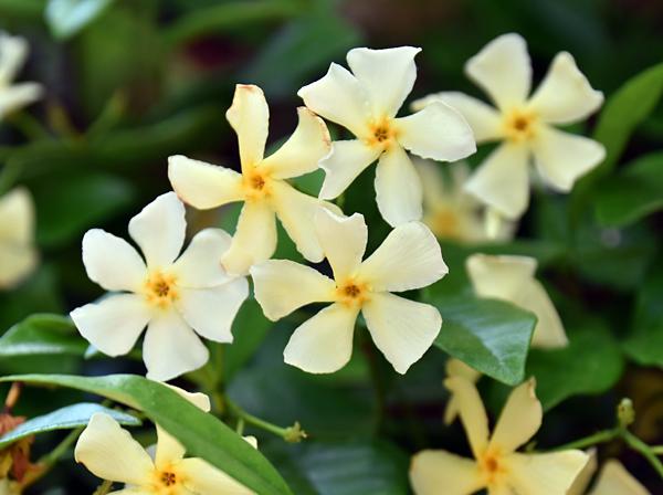 f:id:flowerTDR:20170602200056j:plain