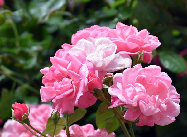 f:id:flowerTDR:20170605215249j:plain