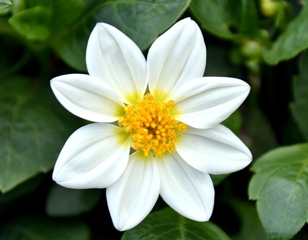 f:id:flowerTDR:20170606004221j:plain