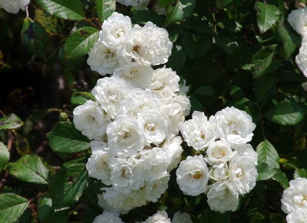 f:id:flowerTDR:20170606211342j:plain
