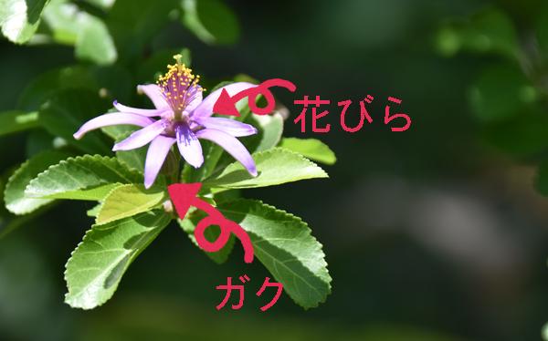 f:id:flowerTDR:20170607205422j:plain
