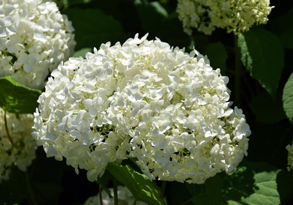 f:id:flowerTDR:20170607211448j:plain