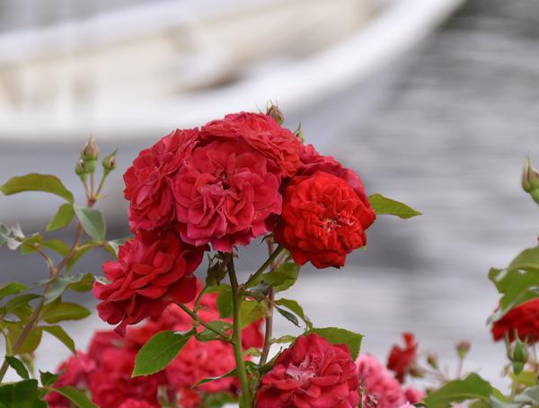 f:id:flowerTDR:20170609090220j:plain