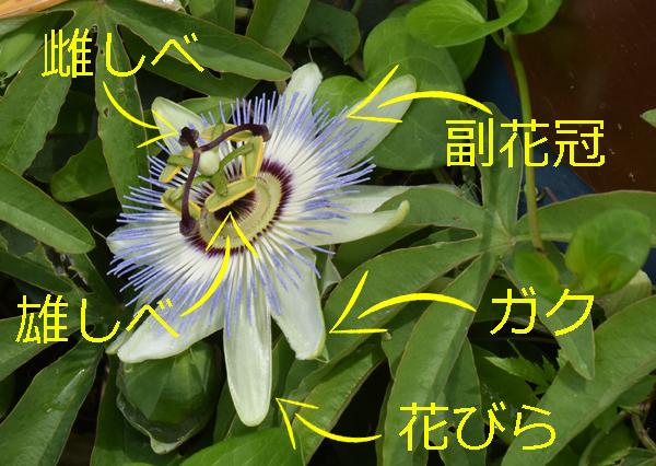 f:id:flowerTDR:20170611080029j:plain