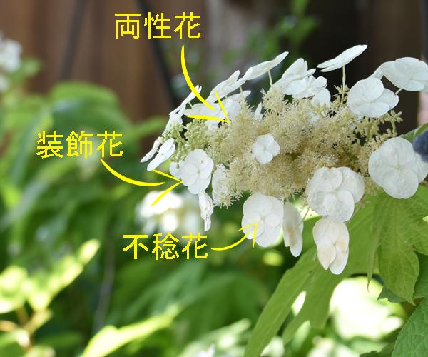 f:id:flowerTDR:20170617213108j:plain