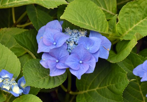 f:id:flowerTDR:20170626003146j:plain