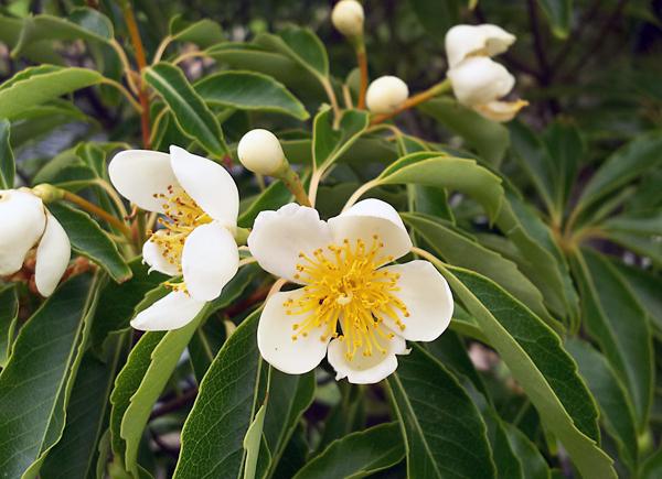 f:id:flowerTDR:20170630224540j:plain