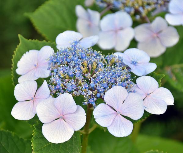 f:id:flowerTDR:20170701132829j:plain
