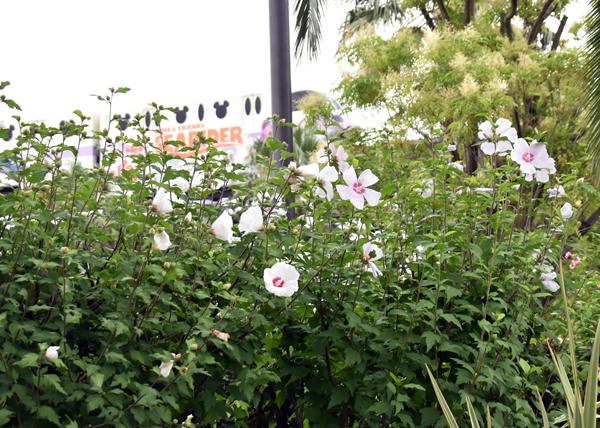 f:id:flowerTDR:20170726092333j:plain