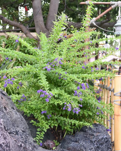 f:id:flowerTDR:20170728235406j:plain
