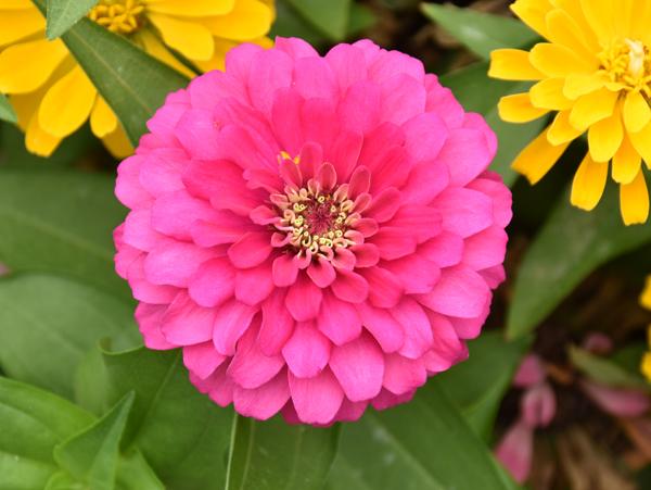 f:id:flowerTDR:20170801230843j:plain