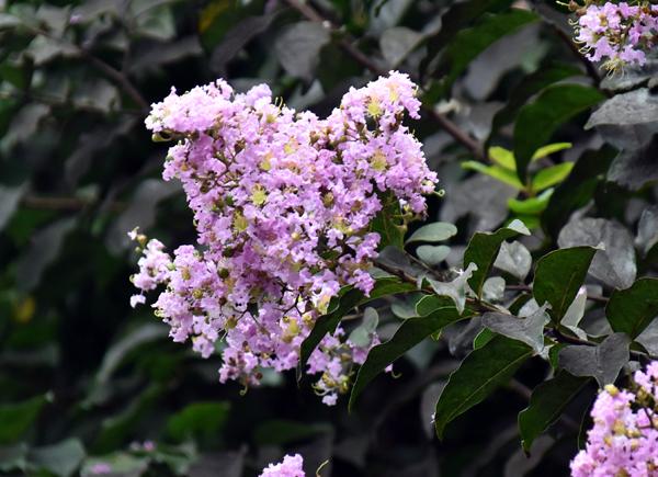 f:id:flowerTDR:20170818154602j:plain