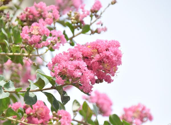 f:id:flowerTDR:20170821010304j:plain
