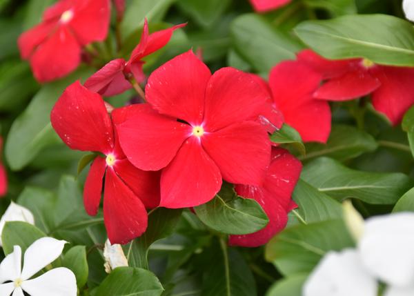 f:id:flowerTDR:20171003082034j:plain