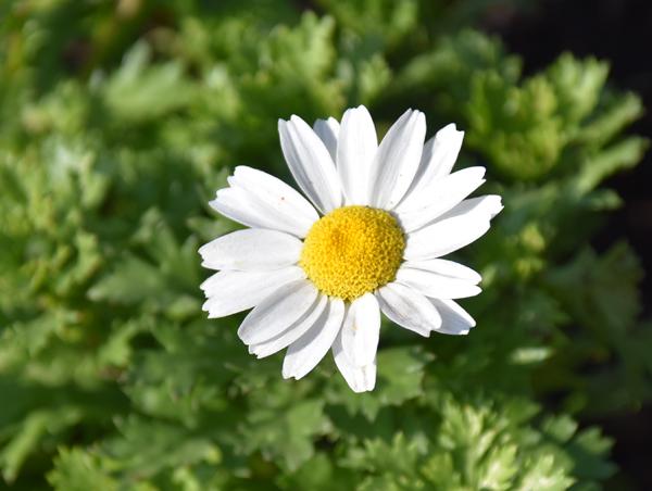 f:id:flowerTDR:20171211224917j:plain