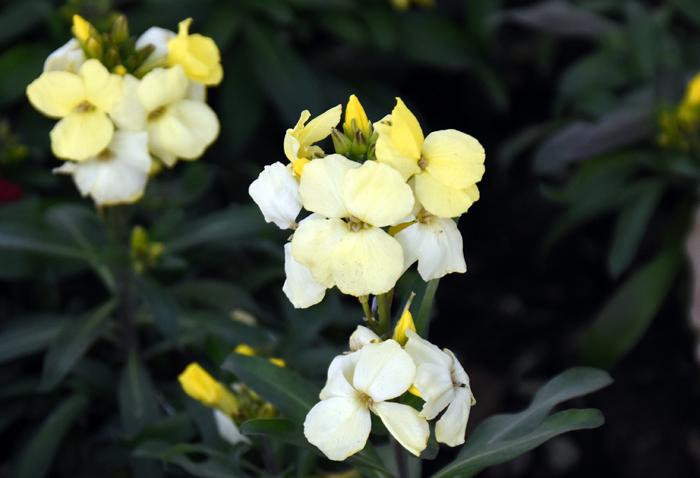 f:id:flowerTDR:20180212001814j:plain