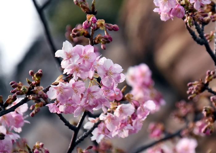 f:id:flowerTDR:20180217104703j:plain