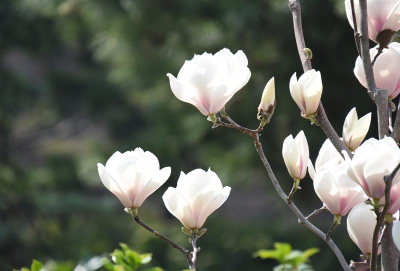 f:id:flowerTDR:20180401143848j:plain