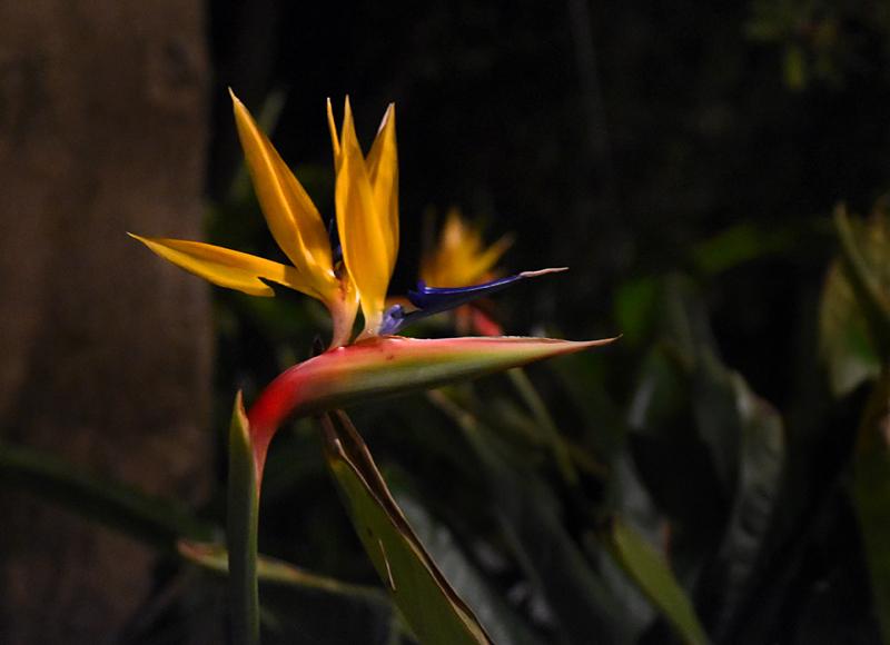 f:id:flowerTDR:20180403001935j:plain