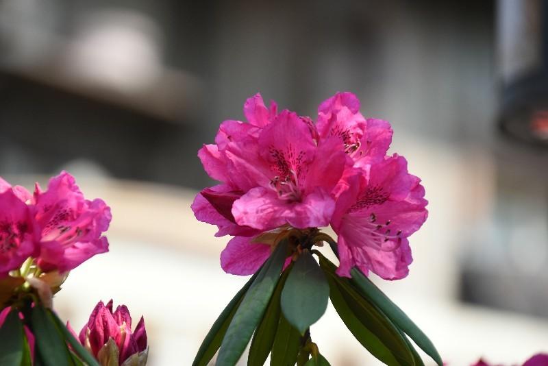 f:id:flowerTDR:20180405090408j:plain