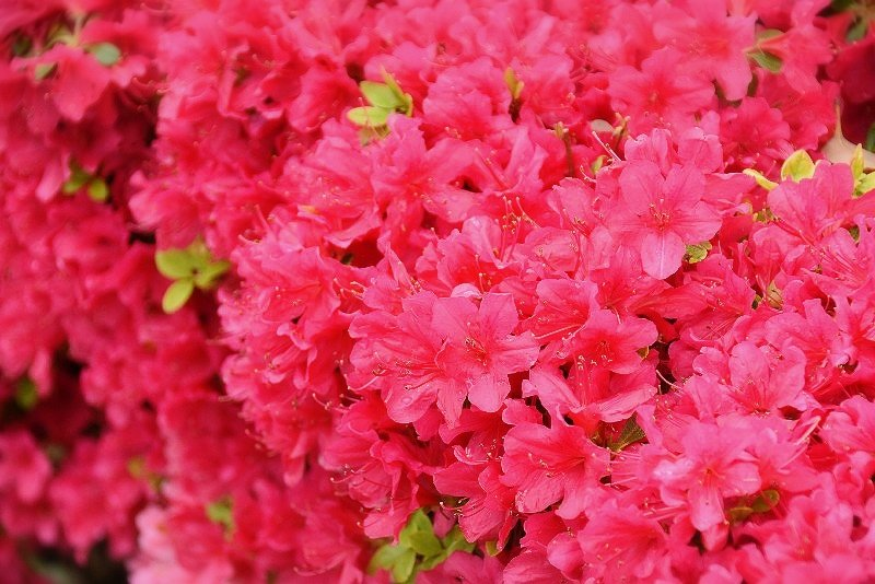 f:id:flowerTDR:20180418113049j:plain