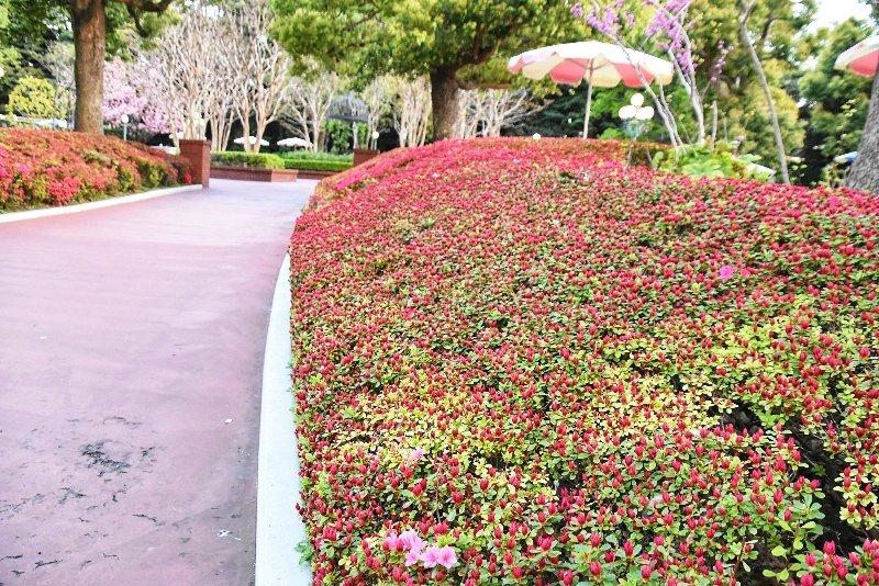 f:id:flowerTDR:20180418113059j:plain