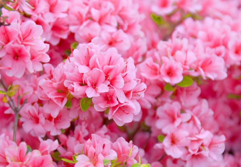 f:id:flowerTDR:20180418141434j:plain