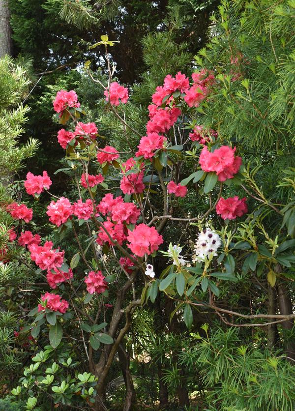 f:id:flowerTDR:20180508072136j:plain