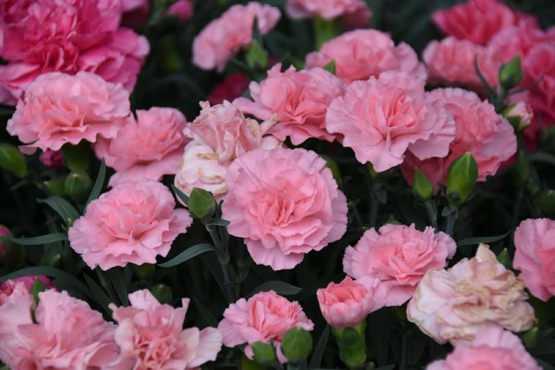 f:id:flowerTDR:20180513131837j:image