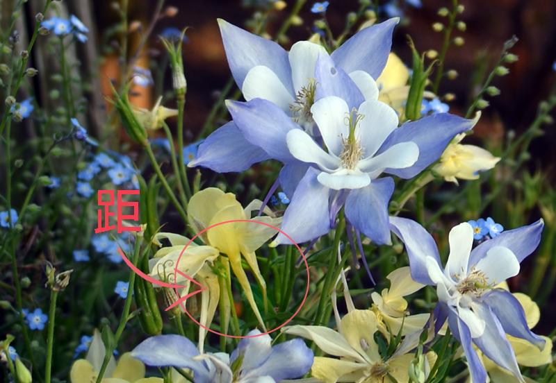 f:id:flowerTDR:20180523094542j:plain