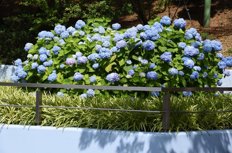 f:id:flowerTDR:20180528082237j:plain