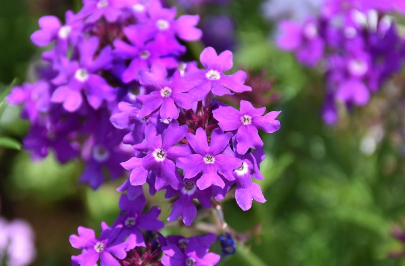 f:id:flowerTDR:20180601083930j:plain