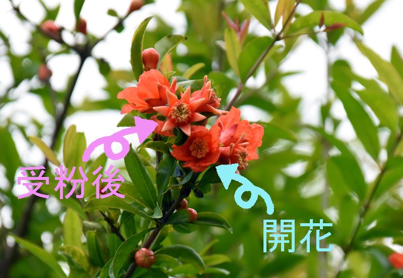 f:id:flowerTDR:20180603151532j:plain