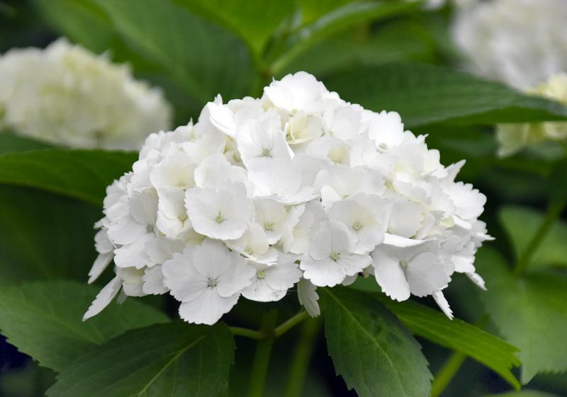 f:id:flowerTDR:20180606082414j:plain