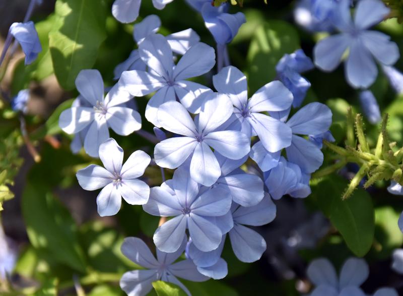 f:id:flowerTDR:20180717082120j:plain