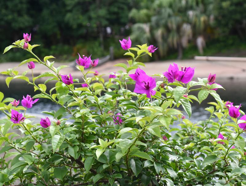 f:id:flowerTDR:20180823122400j:plain