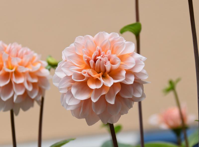 f:id:flowerTDR:20181108083255j:plain